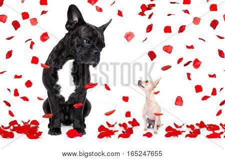 Two Dogs In Love On Valentines Day