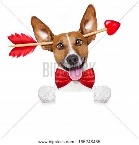 Crazy In Love Valentines Dog