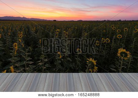 Opening wooden floor beautiful sky after sunset over sunflower field natural landscape background