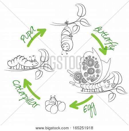 The metamorphosis of the butterfly ( egg, caterpillar, pupa, butterfly ). Life cycle. Funny cartoon character. Vector illustration. Coloring book
