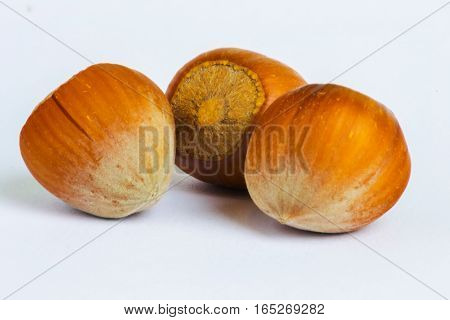 Hazelnuts isolated on white background. Indoor macro.
