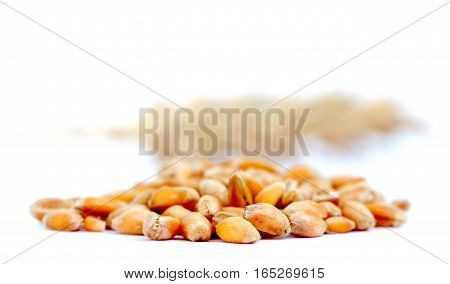 picture of a seeds of wheat on white background