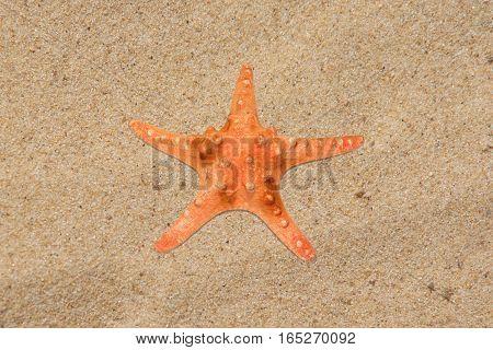 Orange five rays starfish on clear beach sand closeup