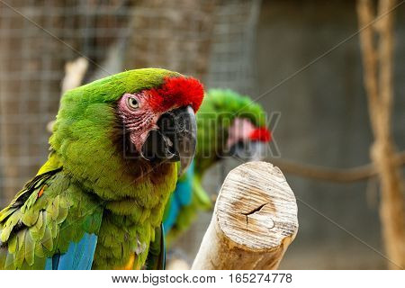 Parrot Sitting On A Thick Branch