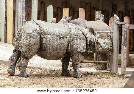 Vienna / Austria - July 22nd 2014: photo of an Indian rhinoceros at Vienna Zoo