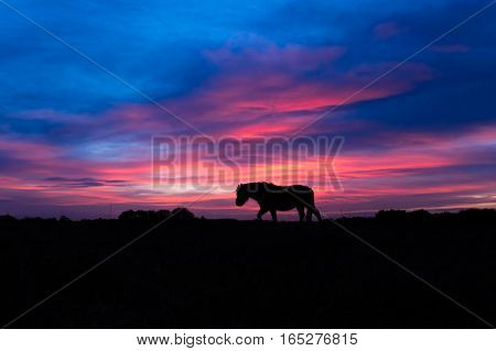 New Forest pony silhouetted walking in front of sunset. Wild horse in front of impressive sky at Stoney Cross in a national park in the south of England UK