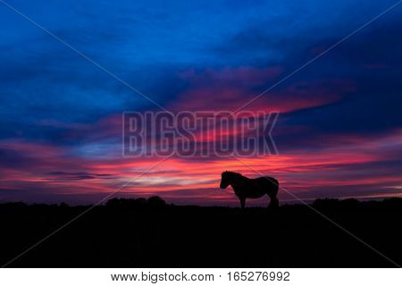 New Forest pony silhouetted standing in front of sunset. Wild horse in front of impressive sky at Stoney Cross in a national park in the south of England UK