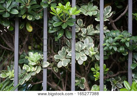 Plants Coming Through Metal Gate