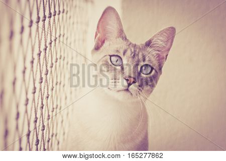 Cat Looks At Camera With Security Net On Its Side