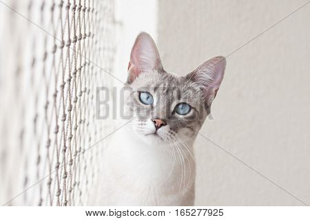 Cat Stares At Camera With Safety Net On Its Side