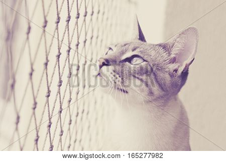 Locked Up Cat Looks Outside
