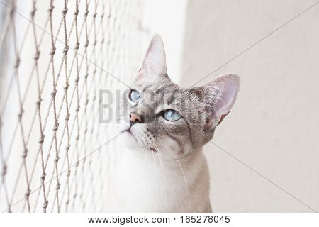 Captive Cat Looks Outside