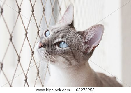 Adorable White Cat Looks At Net
