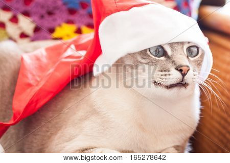 Adorable White Cockeyed Cat