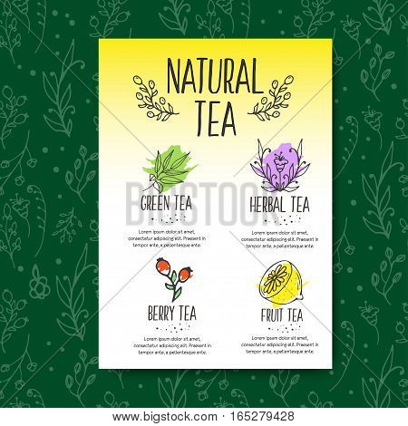 Herbal tea menu brochure. Organic herbs and wild flowers. Hand sketched fruits and berries illustration. Flower and leaves branches. Floral vector design.