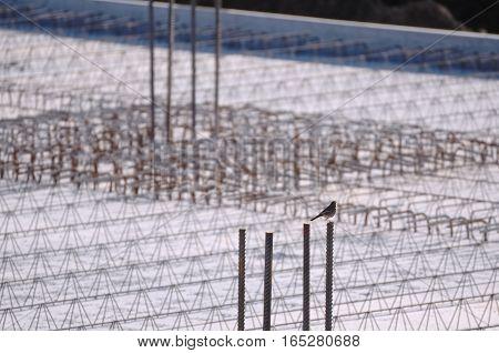 Concrete Reinforcement on a Construction Area with Little Bird
