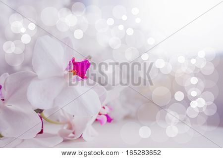 pink orchid flower gently. card or background