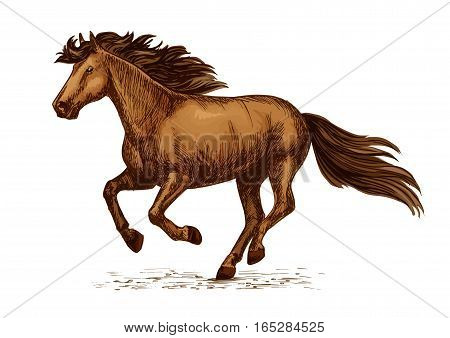 Horse racing vector sketch. Arabian mustang running or galloping on sport races. Brown wild or farm stallion symbol for equestrian horserace riding club, equine exhibition or contest