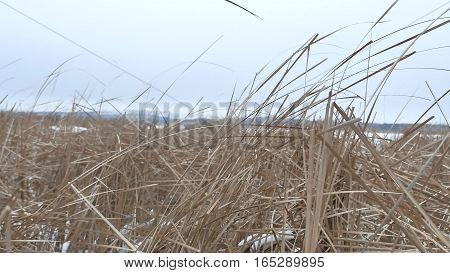 dry grass marsh winter reed nature beautiful landscape
