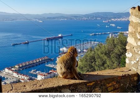 Gibraltar, Great Britain, January 13, 2017: Gibraltar and the Bay of Algaciras