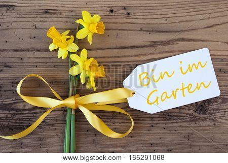 Label With German Text Bin Im Garten Means I am In The Garden. Yellow Spring Narcissus Or Daffodil With Ribbon. Aged, Rustic Wodden Background. Greeting Card For Spring Season