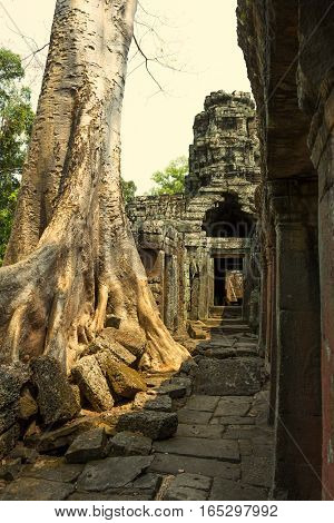 Temple of Angkor Wat. Siem Reap. Khmer civilization. Travel photos from Cambodia