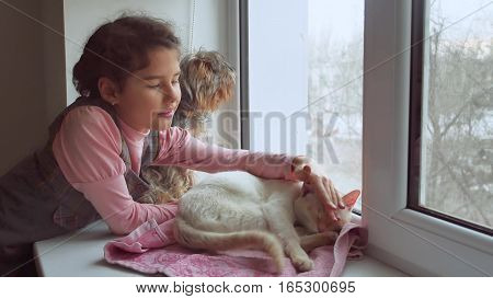 girl teen and pets cat and dog looking out window, cat sleeps pet