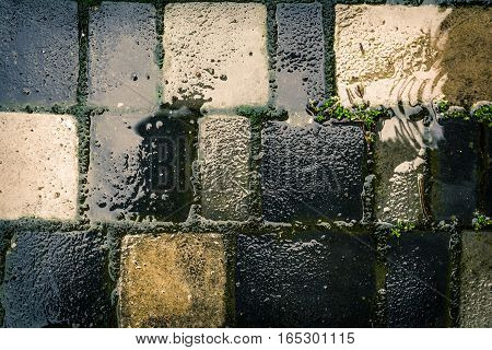 Tile in a garden after a heavy rainfall