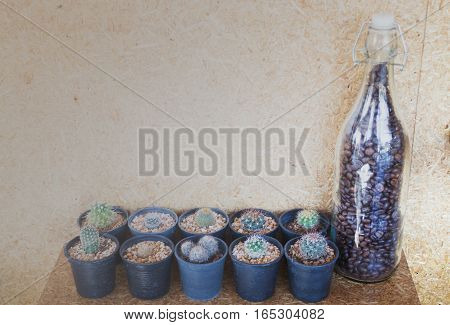 Small cactus decorated on cork wall stock photo