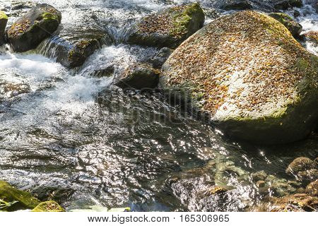 Brook flowing and fallen leaves on stone