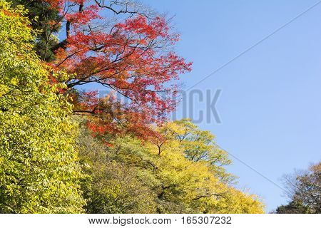 Colorful autumn trees under blue sky in Kumamoto