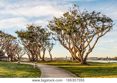 Coral trees line pathway at Embarcadero Park North in San Diego, California.