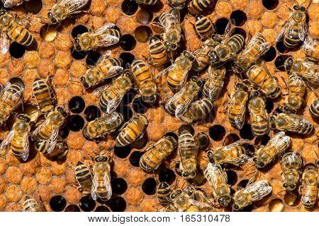 The Queen Bee Swarm - Selective Focus