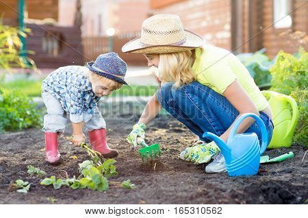 Kid boy and mother planting strawberry seedling into fertile soil outside in garden
