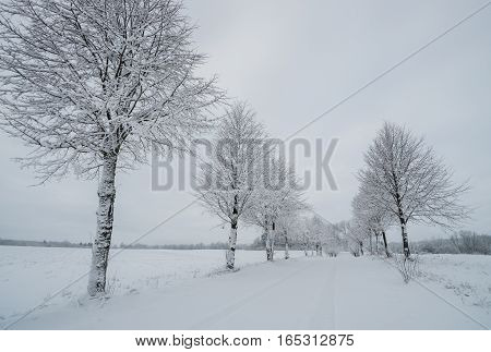 Alley In Snowy Day
