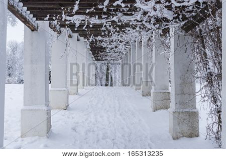 Column Alley In Winter Period