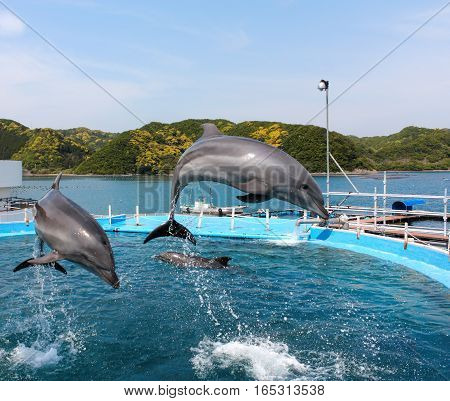Dolphin diving jump pool blue water sea
