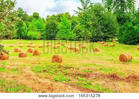 Rolls Of Hay Lie In A Collapsed Large Sloping Field.