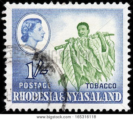 LUGA RUSSIA - SEPTEMBER 18 2015: A stamp printed by RHODESIA AND NYASALAND shows image portrait of Queen Elizabeth II and farmer harvesting tobacco plants circa 1959