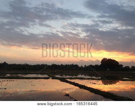 sunset time at the cornfield paddy field December 2016