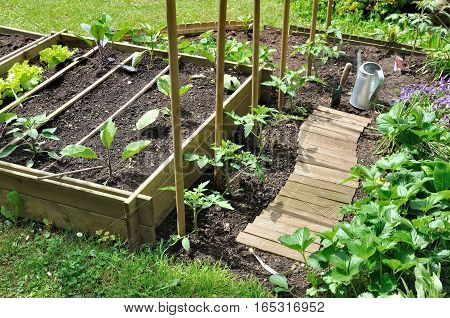 vegetable seedlings planting in a patch in spring