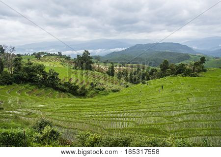Beautiful rice terraces at Ban Pa Pong Pieng Mae chaem Chaing Mai Thailand.