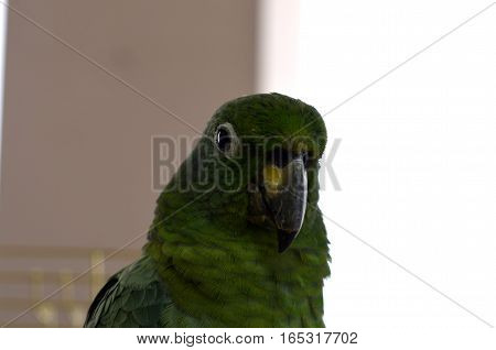 large parrot close up in the frame