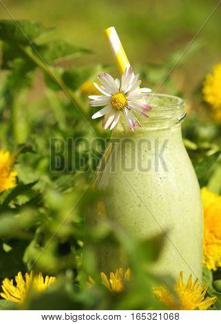 grüner Smoothie mit verschiedenen Wildkräutern (Löwenzahn, Taubnessel, Gänseblümchen) im Freien aufgenommen