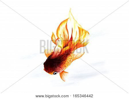 Goldfish on a white background. Watercolor painting