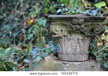 Concrete Corinthian capital overgrown with green ivy close-up.