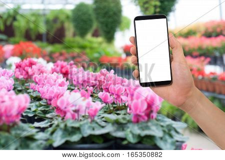 human's hand hold blank of screen smartphone tablet cell phone with blank screen on blurry beautiful flower garden concept of communication with natural.