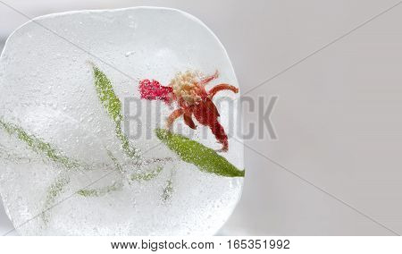 Frozen in ice pomegranate flower with green leaf. Red flower with seeds in ice cube. macro view. copy space.