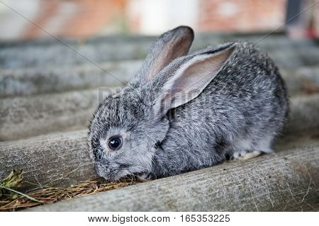 Small cute rabbit funny face, fluffy gray bunny on stone background. soft focus, shallow depth field