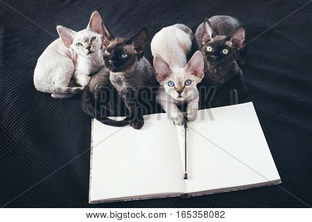 Notepad for making plans pencil and black and white curious Devon Rex kittens. Make goals to do list. Black background. New year resolution planning. Time management.